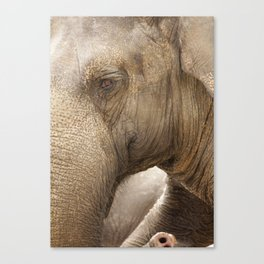 phantastic light Canvas Print