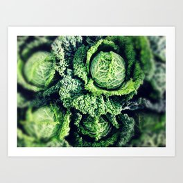 glorious green cabbages Art Print