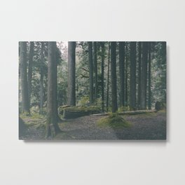 Forgotten Forest. Metal Print