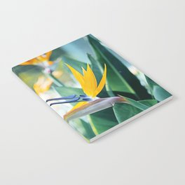 Bird of Paradise Photography, Green Orange Aqua Blue, Tropical Flower Nature Botanical Notebook