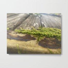 Moss-Covered Wood Metal Print