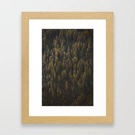 Alaska Tree Wall Framed Art Print