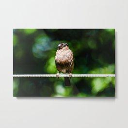 Perched bird Metal Print