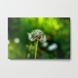 The dandelion Metal Print