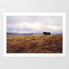 Wandering Horse Art Print
