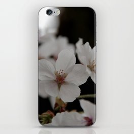Sakura blossoms up close iPhone Skin