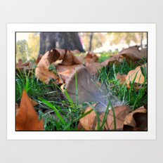Feather in th Park Art Print