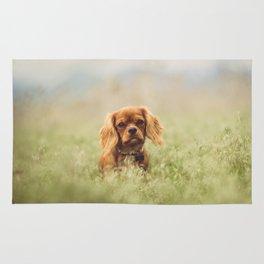 Cute Puppy - Little Dog Rug