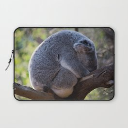 Sleeping Australian Koala, Curlewis, NSW Laptop Sleeve