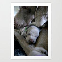 Dog by Nathalie SPEHNER Art Print