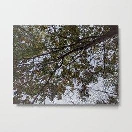 Green Branch Across the Sky Metal Print