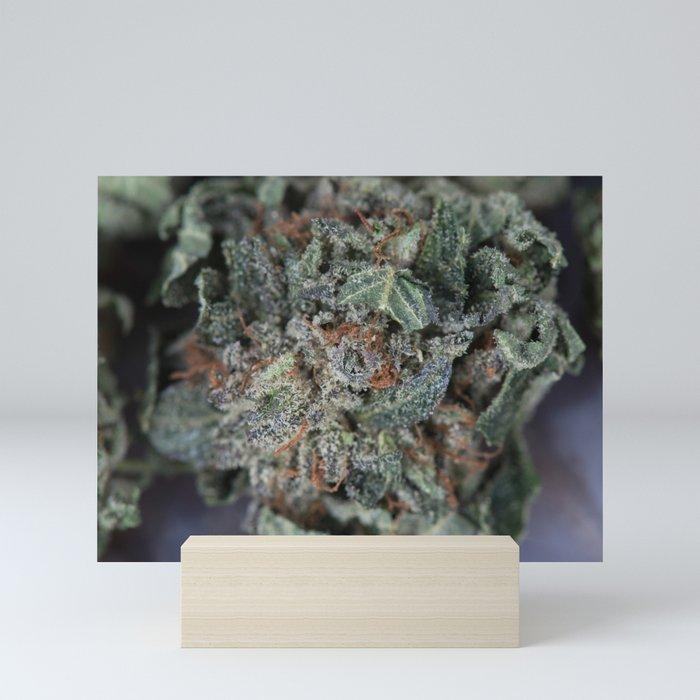 Master Kush Medical Marijuana Mini Art Print