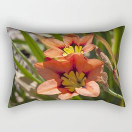 Beautiful Sparaxis Rectangular Pillow