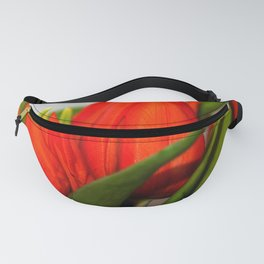 Orange tulips Fanny Pack