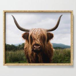 Scottish Highland Cattle in Scotland Portrait II Serving Tray