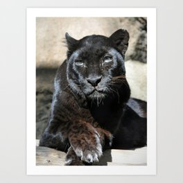Black Leopard Art Print
