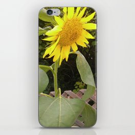 The Surviving Sunflower iPhone Skin
