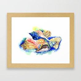 Seashells, ocan beach seashell artwork Framed Art Print