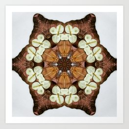 Moth and Flower Mandala Art Print