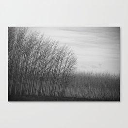 oregon (tree farm) Canvas Print