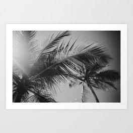 Punta Cana Palm Tree, Dominican Republic Art Print