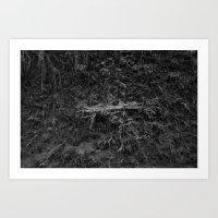 Uprooted Tree Art Print
