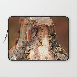 Devil's Tower in Nature Laptop Sleeve