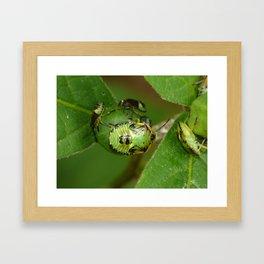 green bugs Framed Art Print