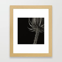 Project 'Decay'. Spear Thistle (Cirsium vulgare) Framed Art Print