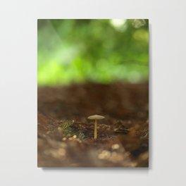 A Single Mushroom In The Morning Light... Metal Print
