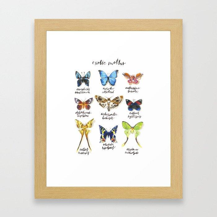 Exotic Moths Framed Art Print