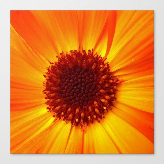 marigold macro Canvas Print