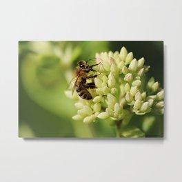 Bee close up Metal Print