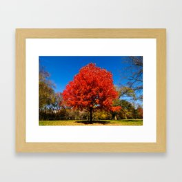 """Autumn Red"" Framed Art Print"