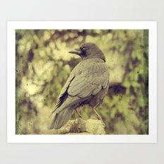 Summer Crow Art Print