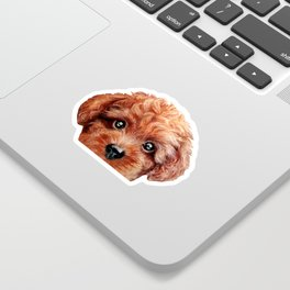 Toy poodle red brown Dog illustration original painting print Sticker