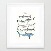 sharks Framed Art Prints featuring Sharks by Amy Hamilton