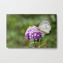 Melanargia larissa kind of anatolia butterfly Metal Print