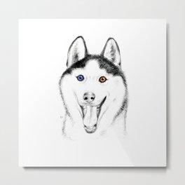 Smiling Husky Metal Print