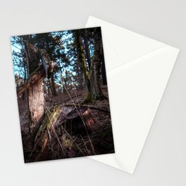 Forest, Wood, Sunset, Colored, Landscape, Photography, Nature, Trees, Netherlands, Fence Stationery Cards