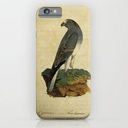 Hen-harrier, falco cyaneus25 iPhone Case