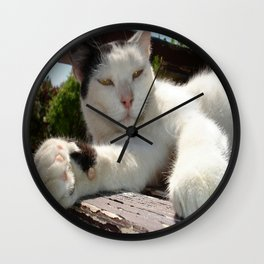 Black and White Bicolor Cat Lounging on A Park Bench Wall Clock