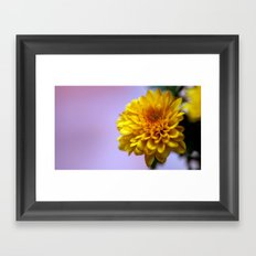Chrysanthemum solitaire 8598 Framed Art Print