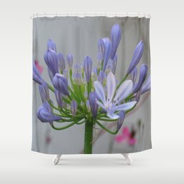 Agapanthus Shower Curtain