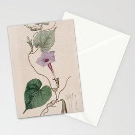 Flower 290 ipomoea bona nox purpurascens Purple afternoon flowering Ipomoea13 Stationery Cards