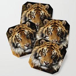 Tiger, Tiger - Big Cat Art Design Coaster