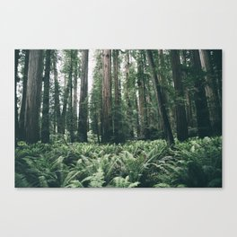 Forest XXV Canvas Print