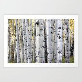 Aspen Forest Art Print