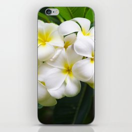White Frangipani (plumeria) flower, Hawaii, USA iPhone Skin