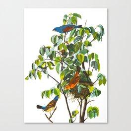 Blue Grosbeak Bird Canvas Print